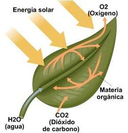 20100210095202-fotosintesispetita.jpg