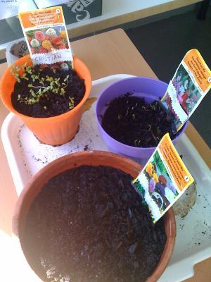 20100308103839-jardineria-26-2.jpg