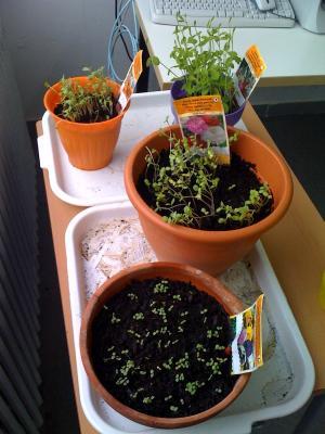 20100308105455-jardineria8-3.jpg